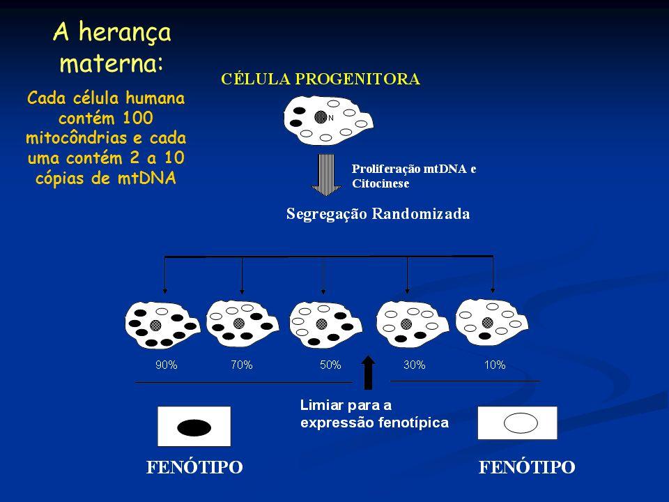 A herança materna: Cada célula humana contém 100 mitocôndrias e cada uma contém 2 a 10 cópias de mtDNA