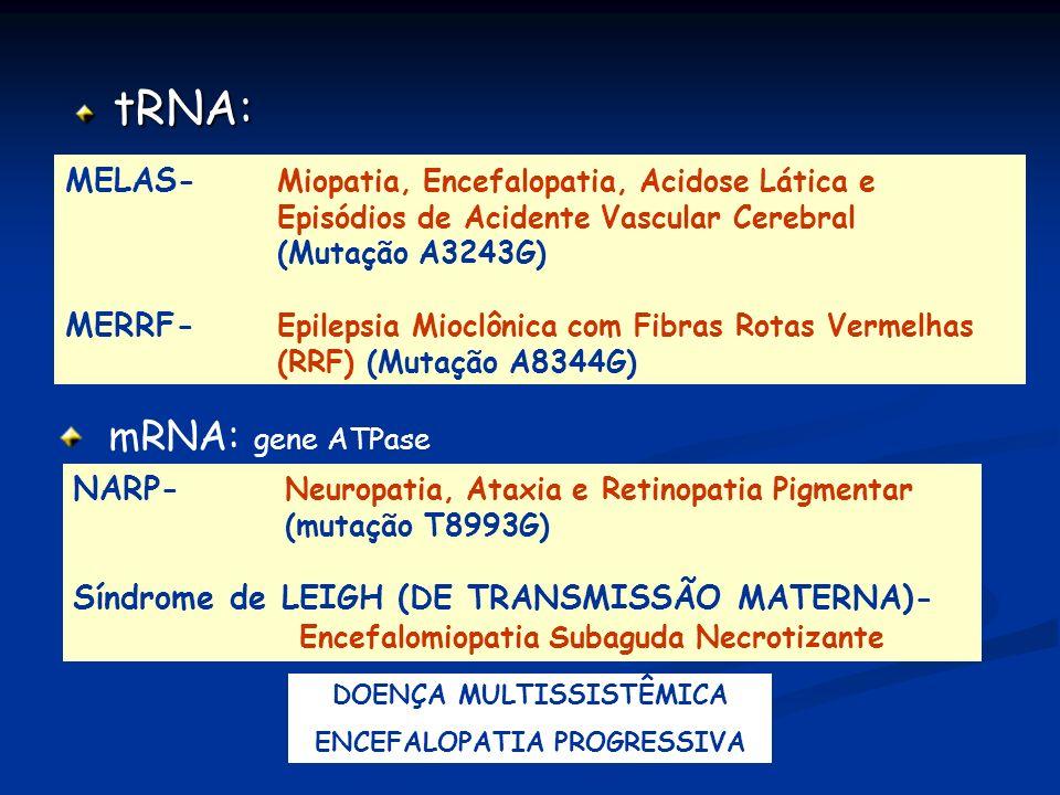 tRNA: MELAS- Miopatia, Encefalopatia, Acidose Lática e Episódios de Acidente Vascular Cerebral (Mutação A3243G) MERRF- Epilepsia Mioclônica com Fibras