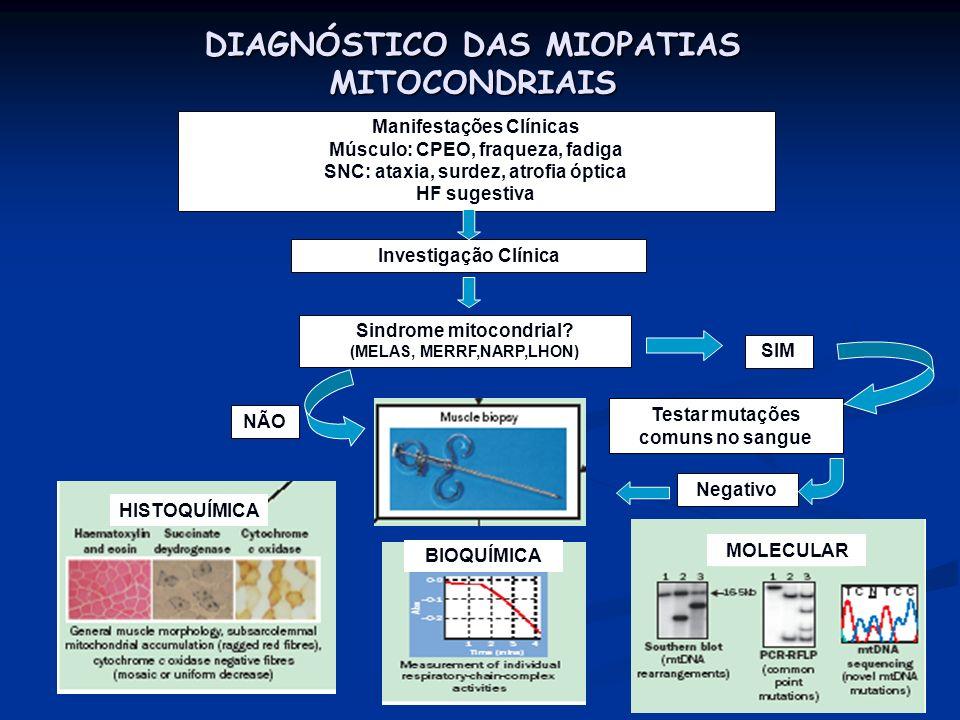 DIAGNÓSTICO DAS MIOPATIAS MITOCONDRIAIS Manifestações Clínicas Músculo: CPEO, fraqueza, fadiga SNC: ataxia, surdez, atrofia óptica HF sugestiva Invest