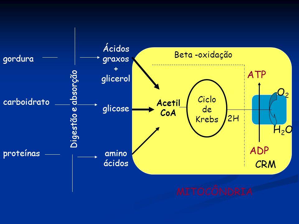 gordura carboidrato proteínas Digestão e absorção Ácidos graxos + glicerol glicose amino ácidos MITOCÔNDRIA Acetil CoA Ciclo de Krebs 2H Beta -oxidaçã