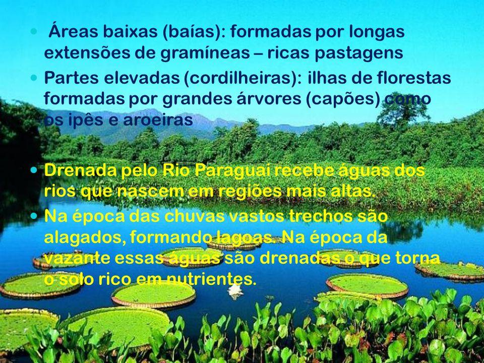 Áreas baixas (baías): formadas por longas extensões de gramíneas – ricas pastagens Partes elevadas (cordilheiras): ilhas de florestas formadas por gra