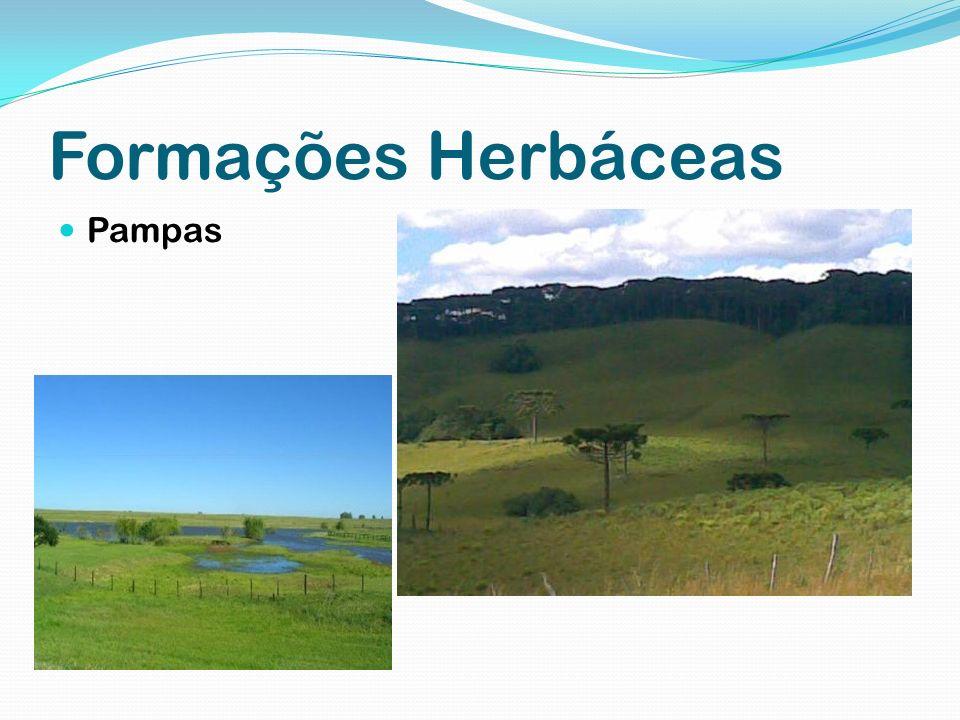 Formações Herbáceas Pampas
