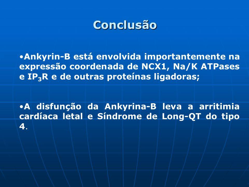 Conclusão Ankyrin-B está envolvida importantemente na expressão coordenada de NCX1, Na/K ATPases e IP 3 R e de outras proteínas ligadoras; A disfunção da Ankyrina-B leva a arritimia cardíaca letal e Síndrome de Long-QT do tipo 4.