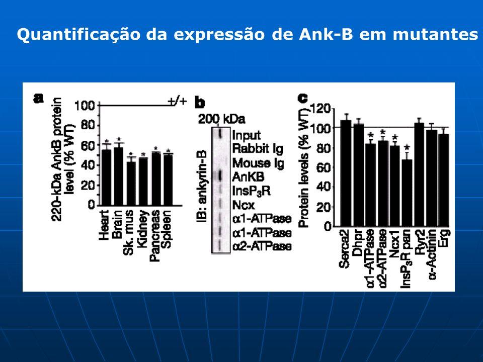 Quantificação da expressão de Ank-B em mutantes