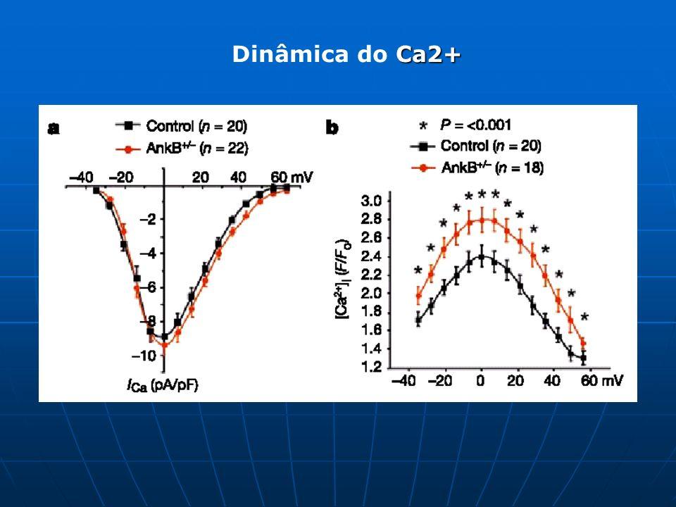 Ca2+ Dinâmica do Ca2+