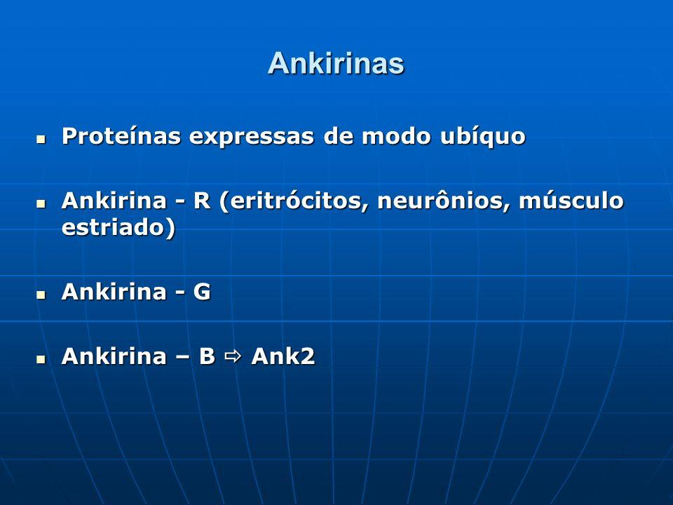 Ankirinas Proteínas expressas de modo ubíquo Proteínas expressas de modo ubíquo Ankirina - R (eritrócitos, neurônios, músculo estriado) Ankirina - R (