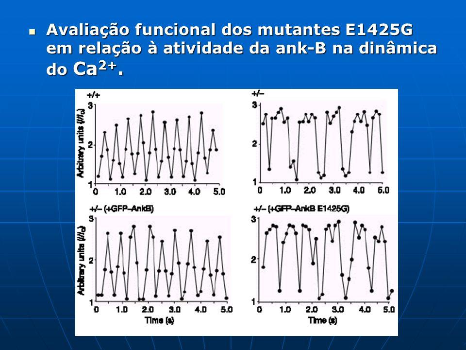 Avaliação funcional dos mutantes E1425G em relação à atividade da ank-B na dinâmica do Ca 2+. Avaliação funcional dos mutantes E1425G em relação à ati