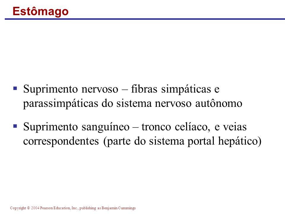 Copyright © 2004 Pearson Education, Inc., publishing as Benjamin Cummings Estômago Suprimento nervoso – fibras simpáticas e parassimpáticas do sistema