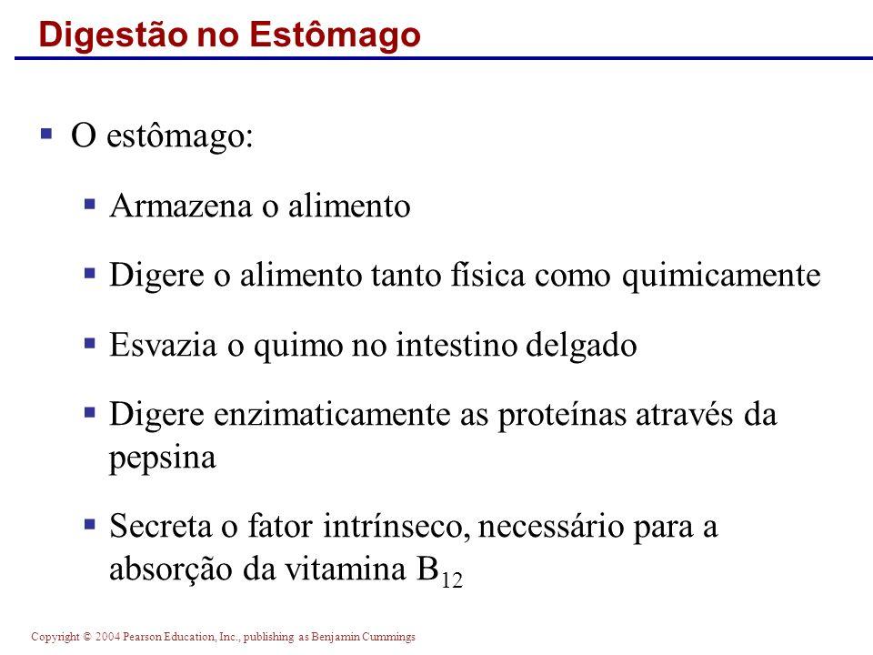 Copyright © 2004 Pearson Education, Inc., publishing as Benjamin Cummings Digestão no Estômago O estômago: Armazena o alimento Digere o alimento tanto