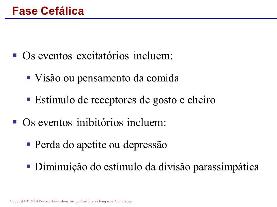 Copyright © 2004 Pearson Education, Inc., publishing as Benjamin Cummings Fase Cefálica Os eventos excitatórios incluem: Visão ou pensamento da comida