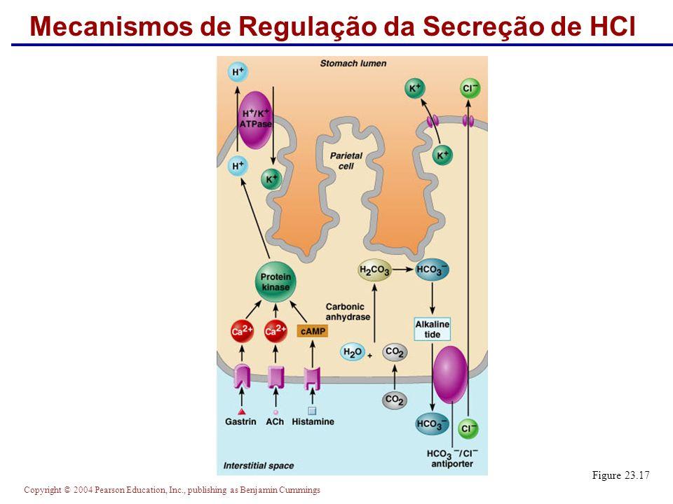 Copyright © 2004 Pearson Education, Inc., publishing as Benjamin Cummings Mecanismos de Regulação da Secreção de HCl Figure 23.17
