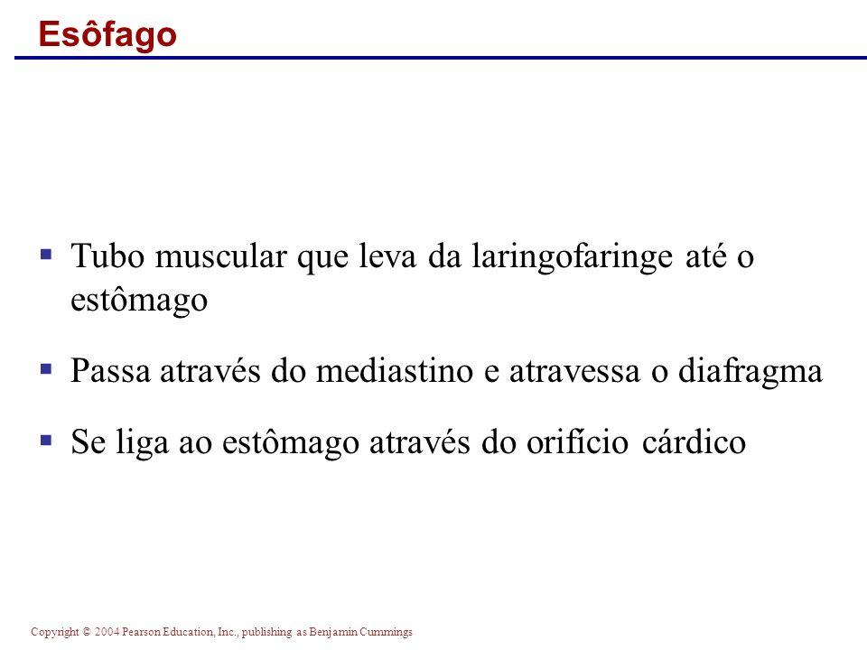 Copyright © 2004 Pearson Education, Inc., publishing as Benjamin Cummings Esôfago Tubo muscular que leva da laringofaringe até o estômago Passa atravé