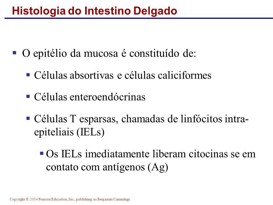 Copyright © 2004 Pearson Education, Inc., publishing as Benjamin Cummings Histologia do Intestino Delgado O epitélio da mucosa é constituído de: Célul