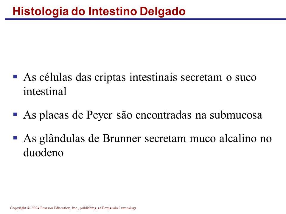 Copyright © 2004 Pearson Education, Inc., publishing as Benjamin Cummings Histologia do Intestino Delgado As células das criptas intestinais secretam