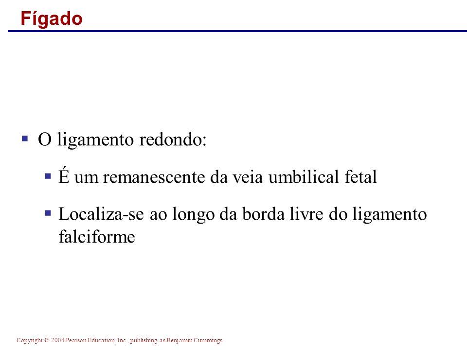 Copyright © 2004 Pearson Education, Inc., publishing as Benjamin Cummings Fígado O ligamento redondo: É um remanescente da veia umbilical fetal Locali