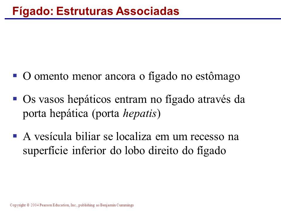 Copyright © 2004 Pearson Education, Inc., publishing as Benjamin Cummings Fígado: Estruturas Associadas O omento menor ancora o fígado no estômago Os