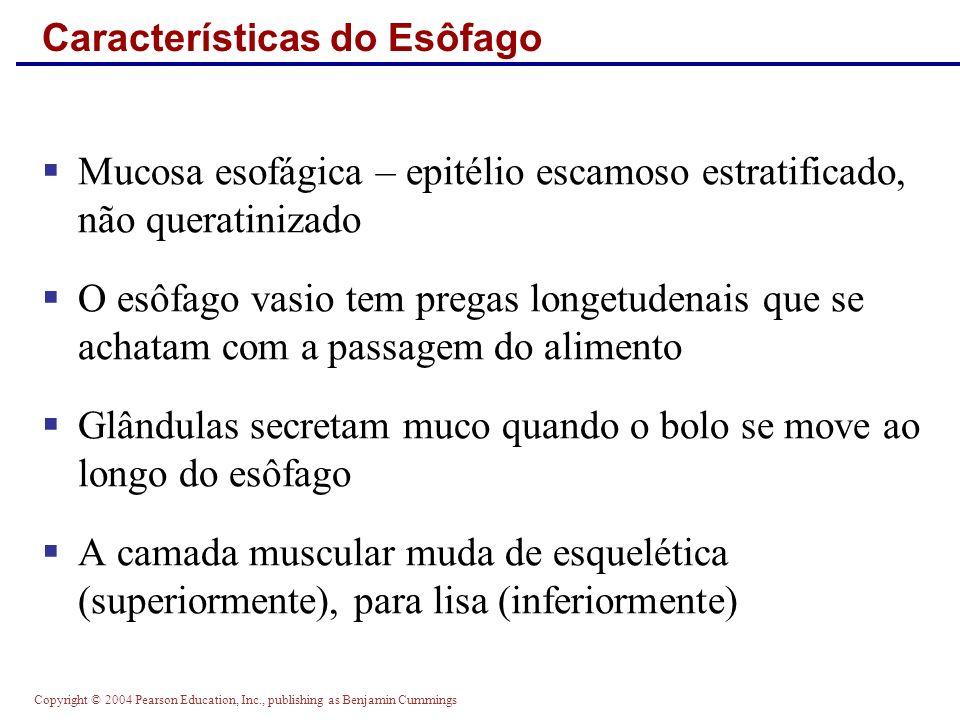 Copyright © 2004 Pearson Education, Inc., publishing as Benjamin Cummings Características do Esôfago Mucosa esofágica – epitélio escamoso estratificad