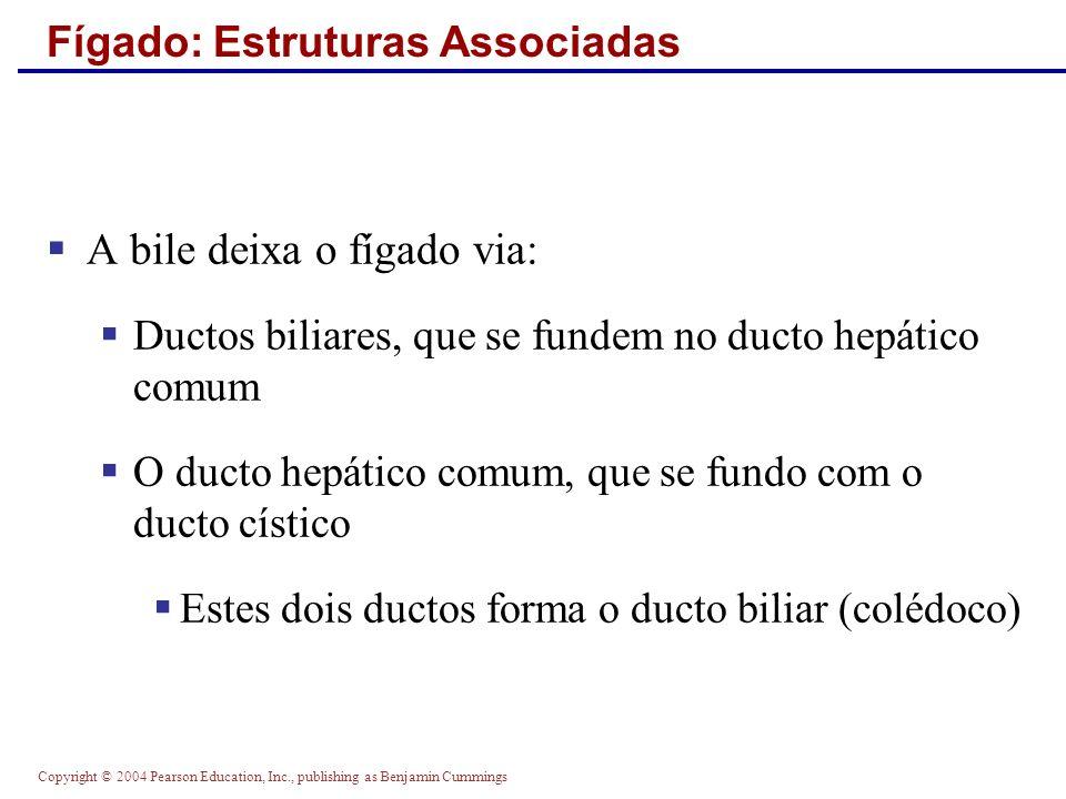 Copyright © 2004 Pearson Education, Inc., publishing as Benjamin Cummings Fígado: Estruturas Associadas A bile deixa o fígado via: Ductos biliares, qu