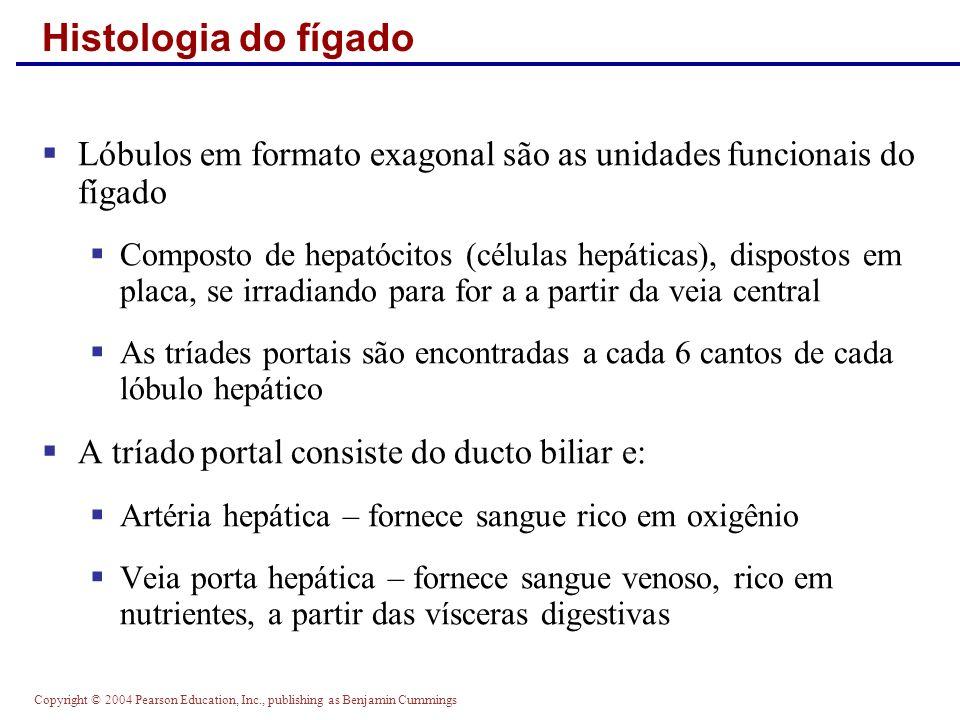Copyright © 2004 Pearson Education, Inc., publishing as Benjamin Cummings Histologia do fígado Lóbulos em formato exagonal são as unidades funcionais