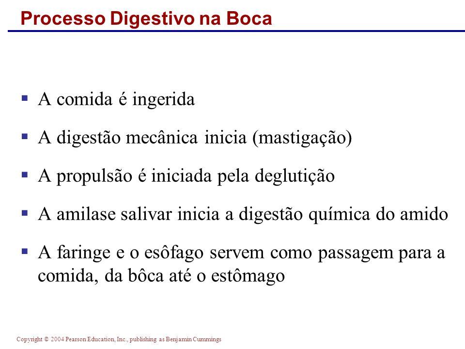 Copyright © 2004 Pearson Education, Inc., publishing as Benjamin Cummings Processo Digestivo na Boca A comida é ingerida A digestão mecânica inicia (m