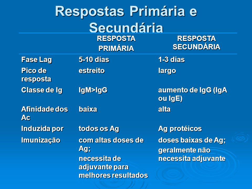 Respostas Primária e Secundária RESPOSTAPRIMÁRIA RESPOSTA SECUNDÁRIA Fase Lag 5-10 dias 1-3 dias Pico de resposta estreitolargo Classe de Ig IgM>IgG a