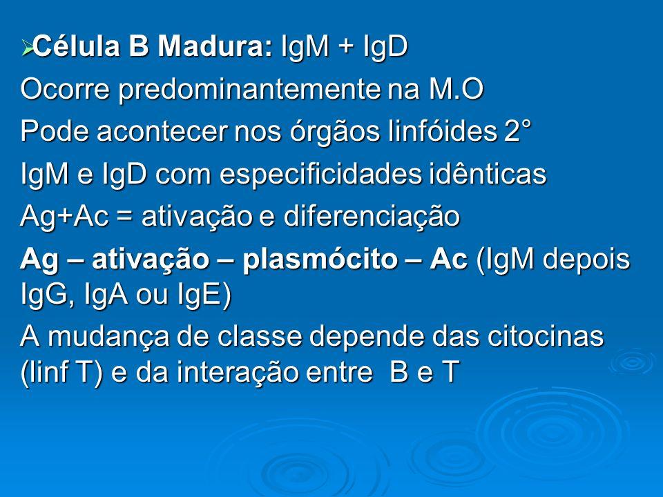 Célula B Madura: IgM + IgD Célula B Madura: IgM + IgD Ocorre predominantemente na M.O Pode acontecer nos órgãos linfóides 2° IgM e IgD com especificid