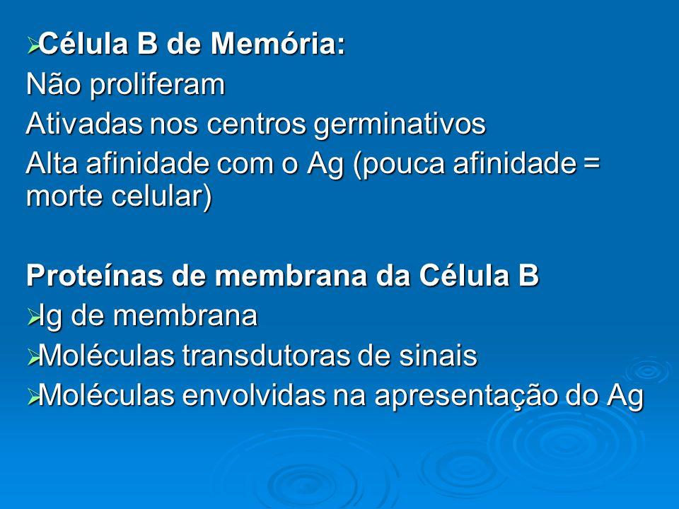 Célula B de Memória: Célula B de Memória: Não proliferam Ativadas nos centros germinativos Alta afinidade com o Ag (pouca afinidade = morte celular) P