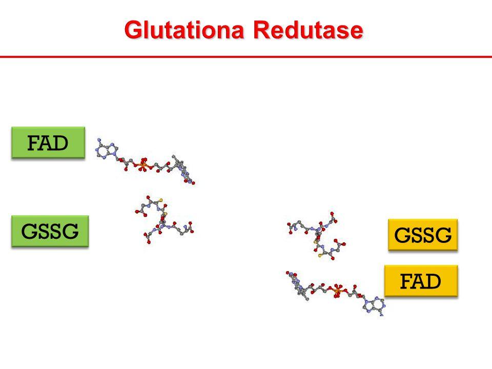 Glutationa Redutase FAD GSSG
