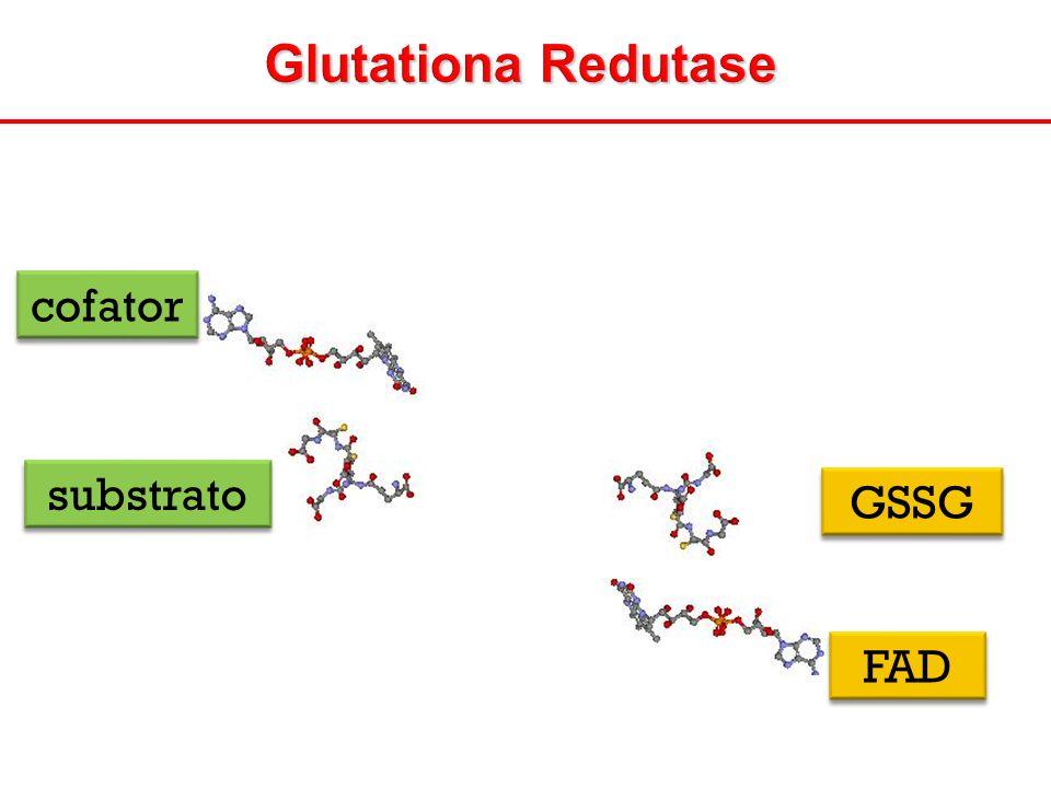 Glutationa Redutase cofator FAD substrato GSSG