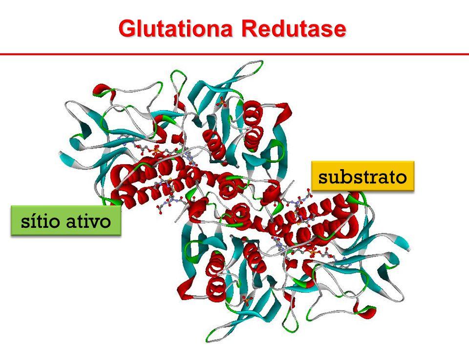 Glutationa Redutase sítio ativo substrato