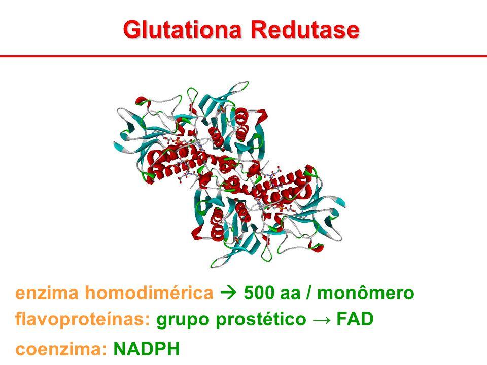 Glutationa Redutase enzima homodimérica 500 aa / monômero flavoproteínas: grupo prostético FAD coenzima: NADPH