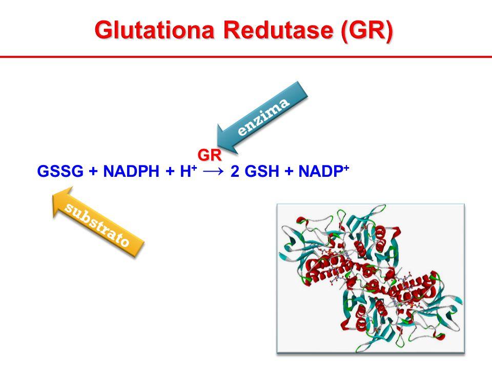 Glutationa Redutase (GR) GSSG + NADPH + H + 2 GSH + NADP +GR enzima substrato