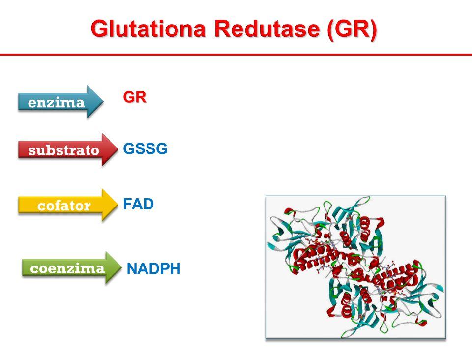 Glutationa Redutase (GR) GR enzima substrato GSSG cofator FAD coenzima NADPH