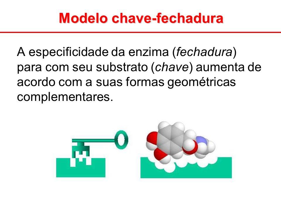 A especificidade da enzima (fechadura) para com seu substrato (chave) aumenta de acordo com a suas formas geométricas complementares. Modelo chave-fec