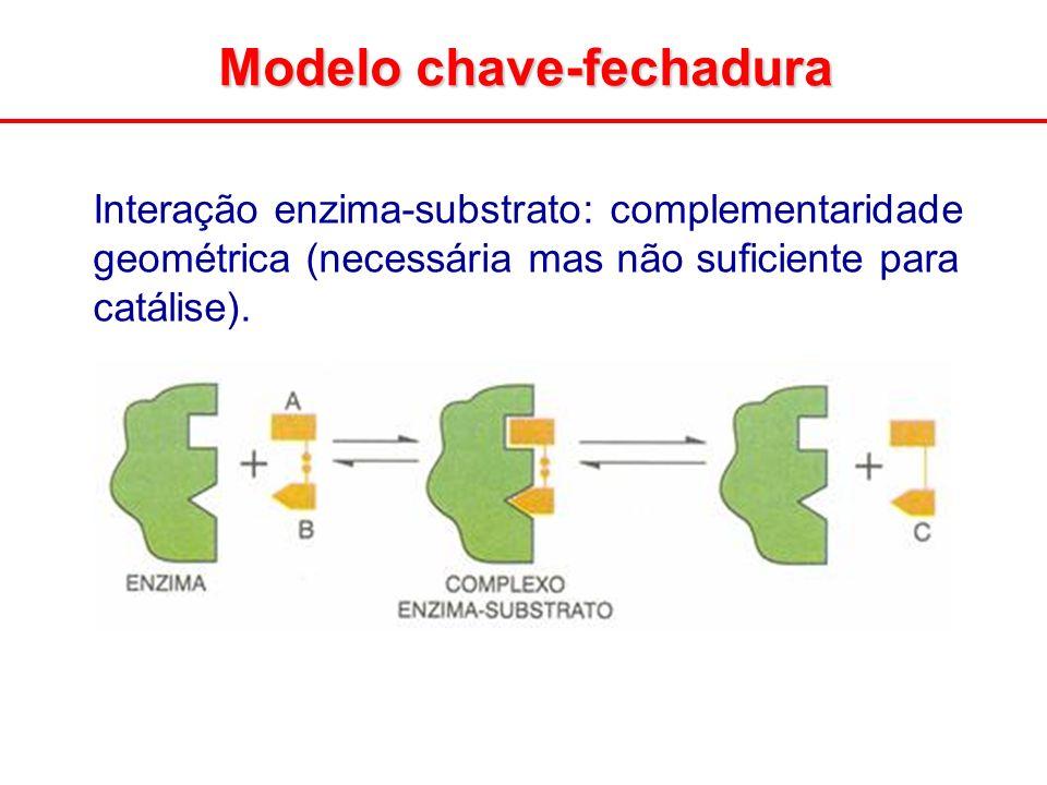 Interação enzima-substrato: complementaridade geométrica (necessária mas não suficiente para catálise).