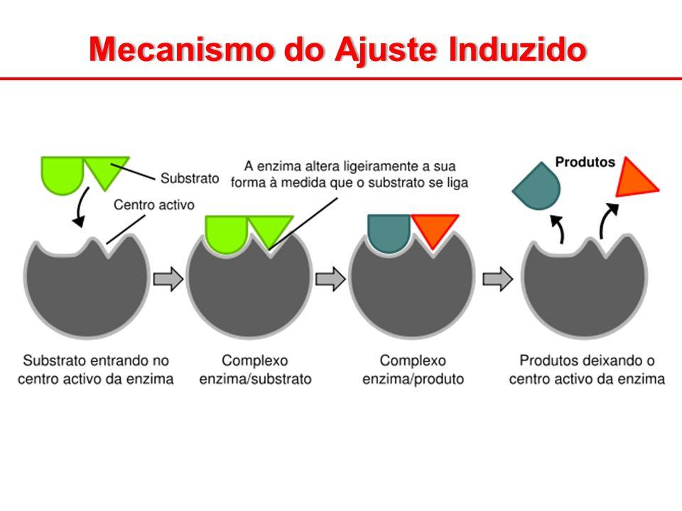 Mecanismo do Ajuste InduzidoMecanismo do Ajuste Induzido