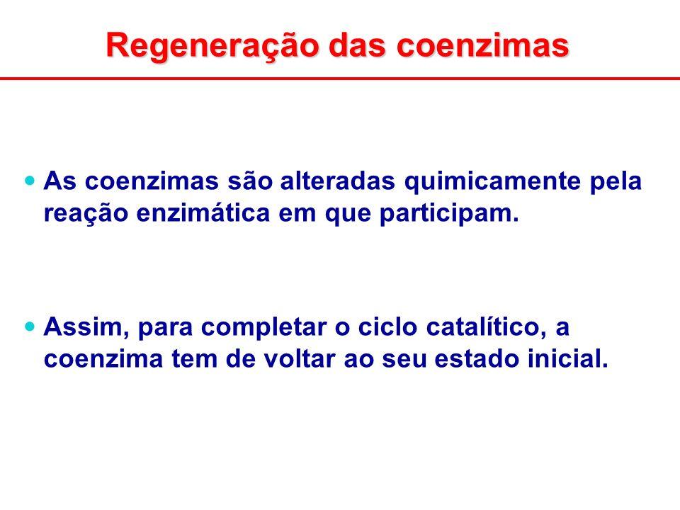Regeneração das coenzimas As coenzimas são alteradas quimicamente pela reação enzimática em que participam. Assim, para completar o ciclo catalítico,