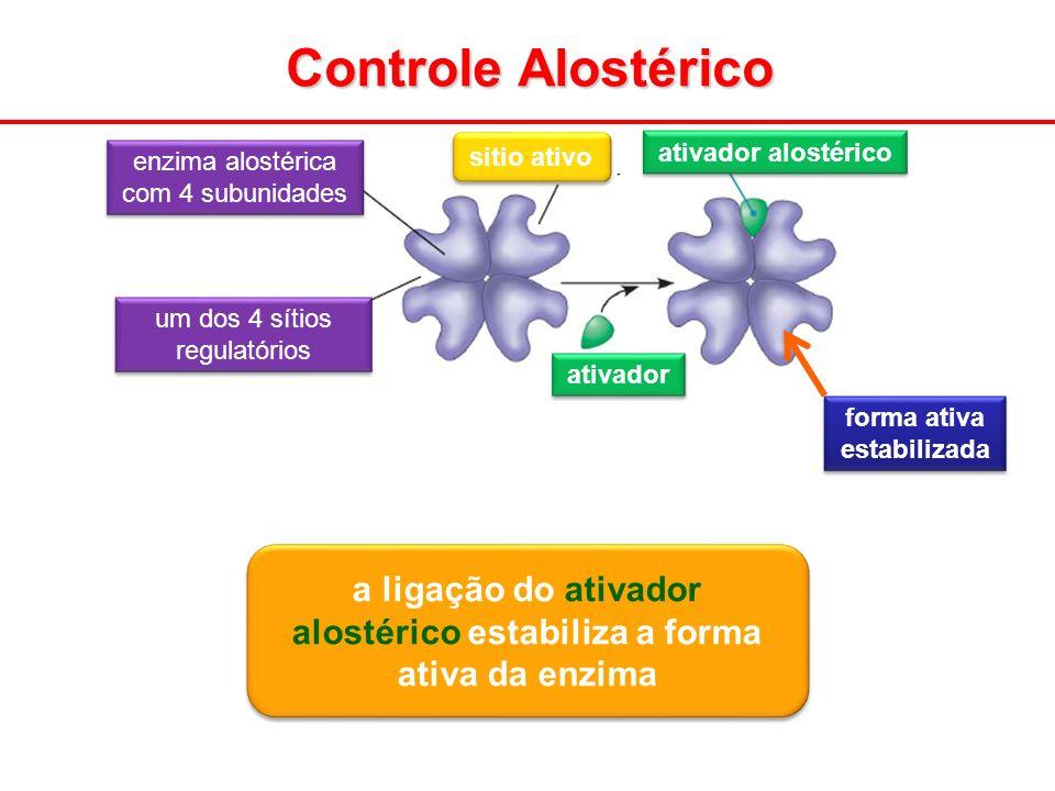 Controle Alostérico ativador alostérico ativador enzima alostérica com 4 subunidades um dos 4 sítios regulatórios sitio ativo a ligação do ativador al