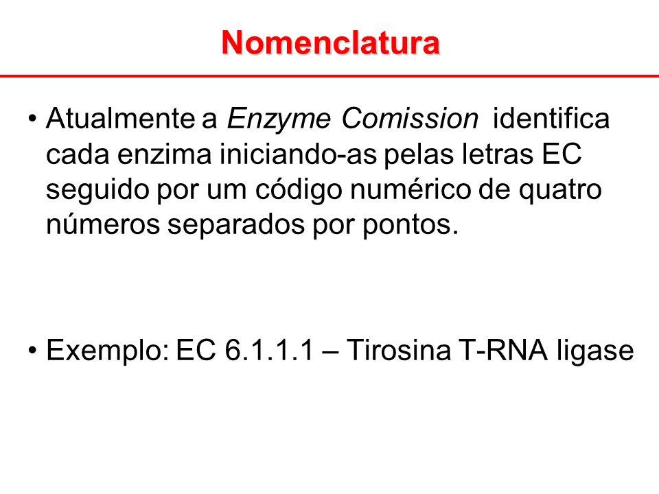 Atualmente a Enzyme Comission identifica cada enzima iniciando-as pelas letras EC seguido por um código numérico de quatro números separados por ponto