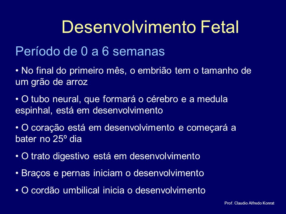 Desenvolvimento Fetal Prof.