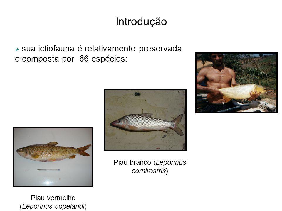 Introdução sua ictiofauna é relativamente preservada e composta por 66 espécies; Piau branco (Leporinus cornirostris) Piau vermelho (Leporinus copelan