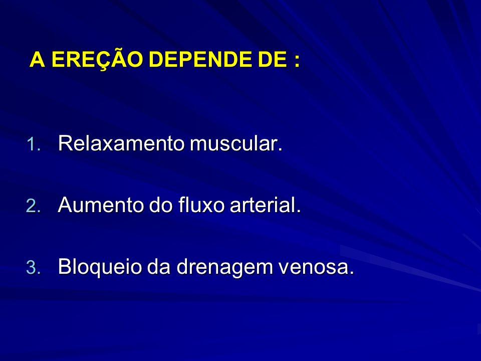 A EREÇÃO DEPENDE DE : 1. Relaxamento muscular. 2. Aumento do fluxo arterial. 3. Bloqueio da drenagem venosa.