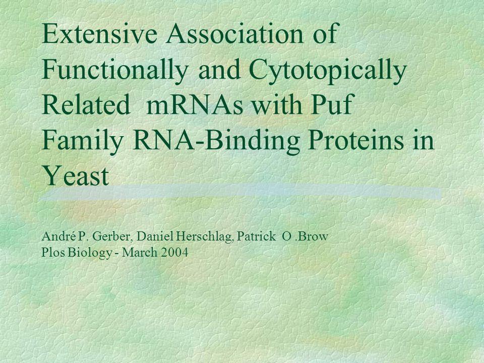 Puf3p Puf1p e Puf2p §Está associado à produtos gênicos mitocondrias.