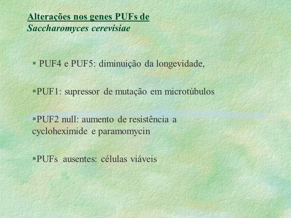 Alterações nos genes PUFs de Saccharomyces cerevisiae § PUF4 e PUF5: diminuição da longevidade, §PUF1: supressor de mutação em microtúbulos §PUF2 null