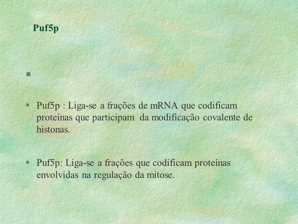 Puf5p § §Puf5p : Liga-se a frações de mRNA que codificam proteínas que participam da modificação covalente de histonas. §Puf5p: Liga-se a frações que