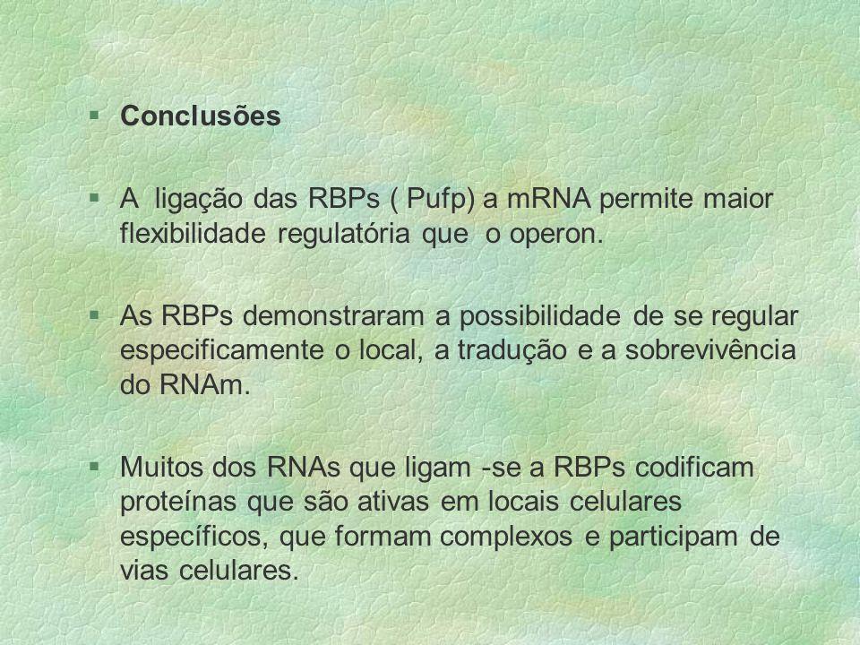 §Conclusões §A ligação das RBPs ( Pufp) a mRNA permite maior flexibilidade regulatória que o operon. §As RBPs demonstraram a possibilidade de se regul