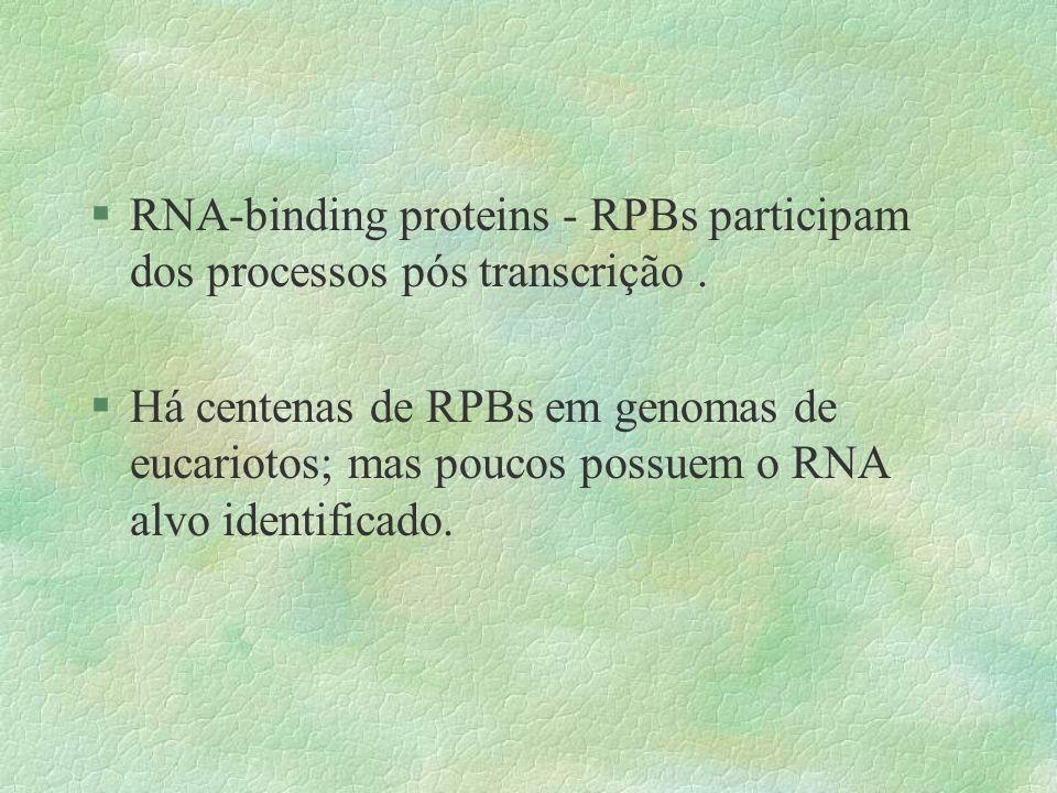 §RNA-binding proteins - RPBs participam dos processos pós transcrição. §Há centenas de RPBs em genomas de eucariotos; mas poucos possuem o RNA alvo id