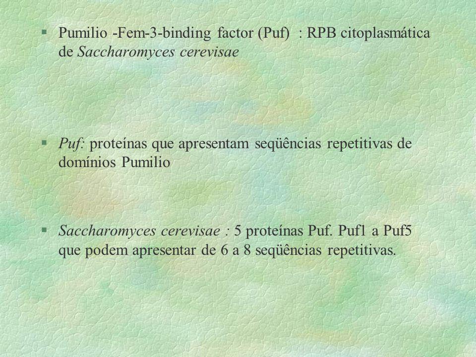 §Pumilio -Fem-3-binding factor (Puf) : RPB citoplasmática de Saccharomyces cerevisae §Puf: proteínas que apresentam seqüências repetitivas de domínios