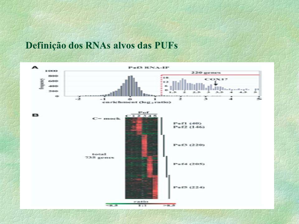 §Em S.cerevisiae : apenas 2 mRNA foram identificados para as proteínas PUF.