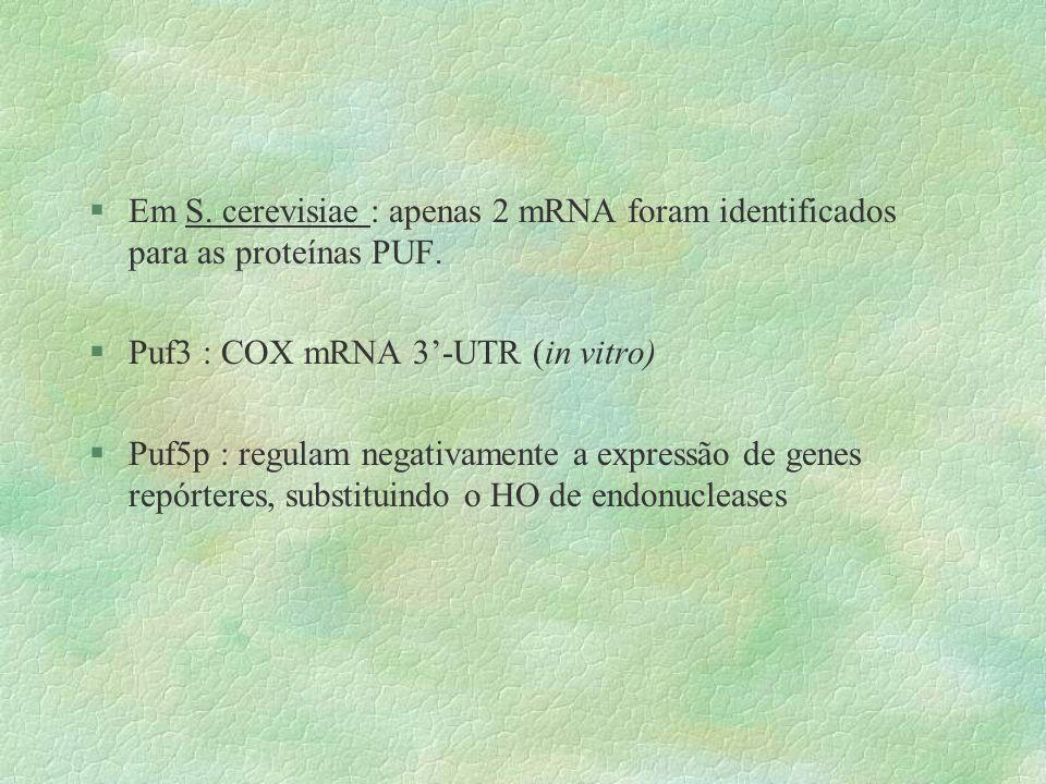 §Em S. cerevisiae : apenas 2 mRNA foram identificados para as proteínas PUF. §Puf3 : COX mRNA 3-UTR (in vitro) §Puf5p : regulam negativamente a expres
